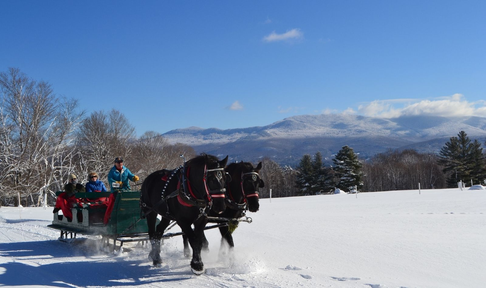 Wildflower winter tour in Stowe Vermont